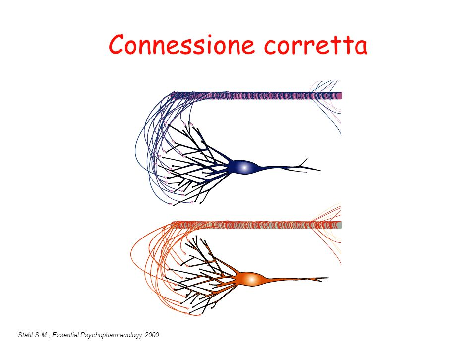Connessione corretta Stahl S.M., Essential Psychopharmacology 2000