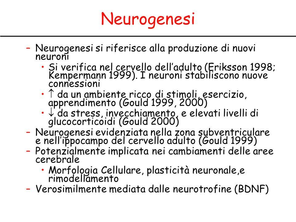 Neurogenesi Neurogenesi si riferisce alla produzione di nuovi neuroni