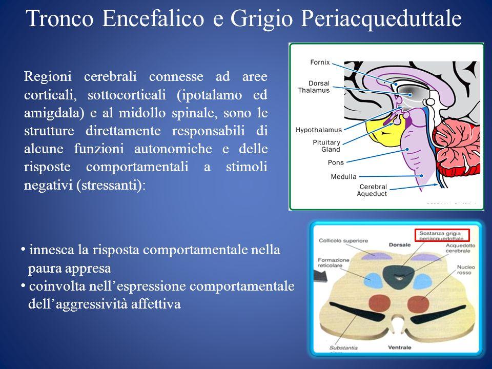 Tronco Encefalico e Grigio Periacqueduttale