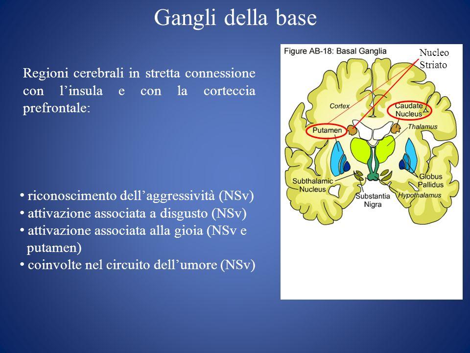 Gangli della base Nucleo Striato. Regioni cerebrali in stretta connessione con l'insula e con la corteccia prefrontale: