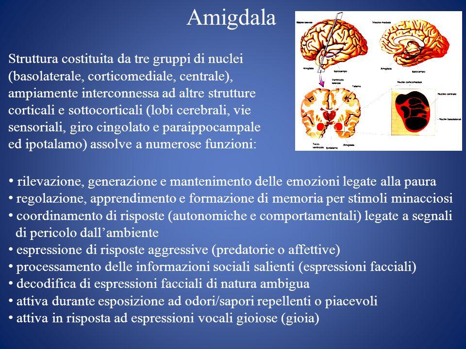 Amigdala Struttura costituita da tre gruppi di nuclei. (basolaterale, corticomediale, centrale), ampiamente interconnessa ad altre strutture.