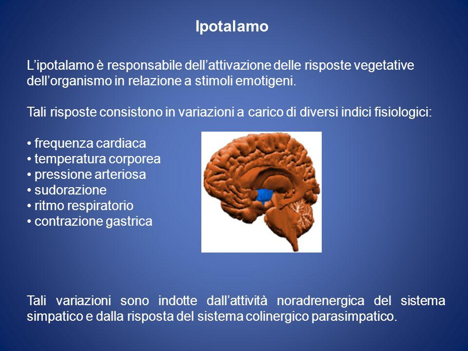 Ipotalamo L'ipotalamo è responsabile dell'attivazione delle risposte vegetative. dell'organismo in relazione a stimoli emotigeni.