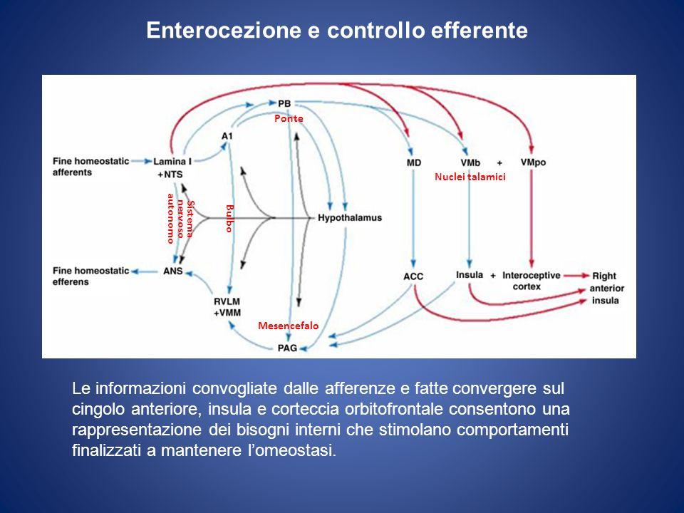 Enterocezione e controllo efferente