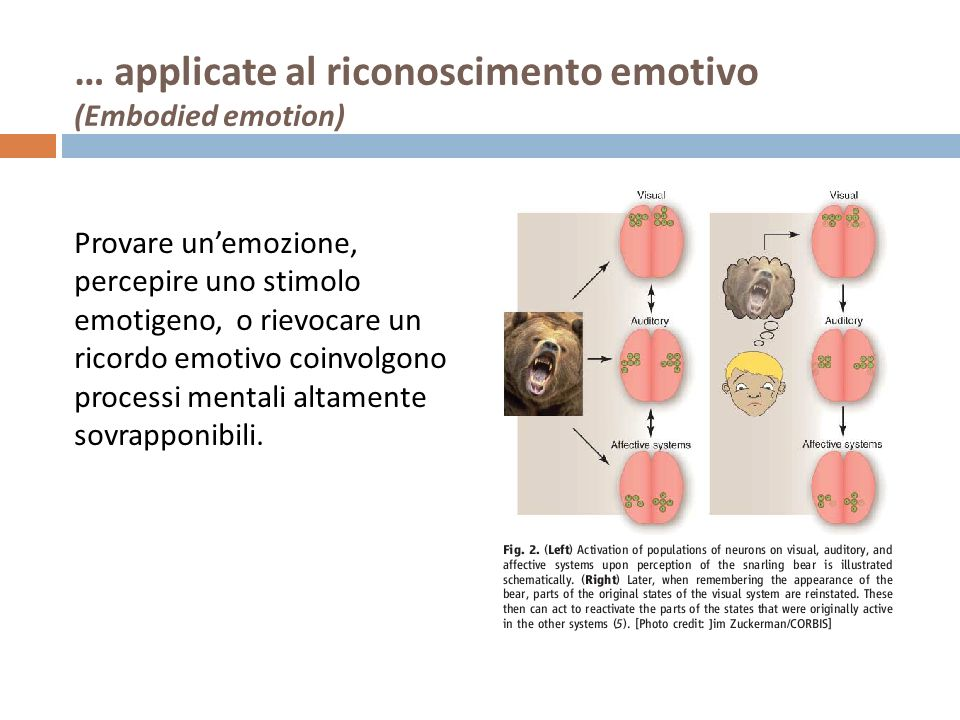 … applicate al riconoscimento emotivo (Embodied emotion)