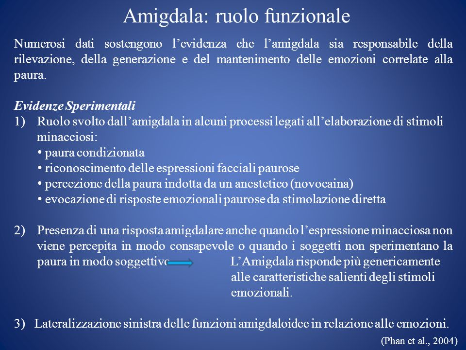 Amigdala: ruolo funzionale
