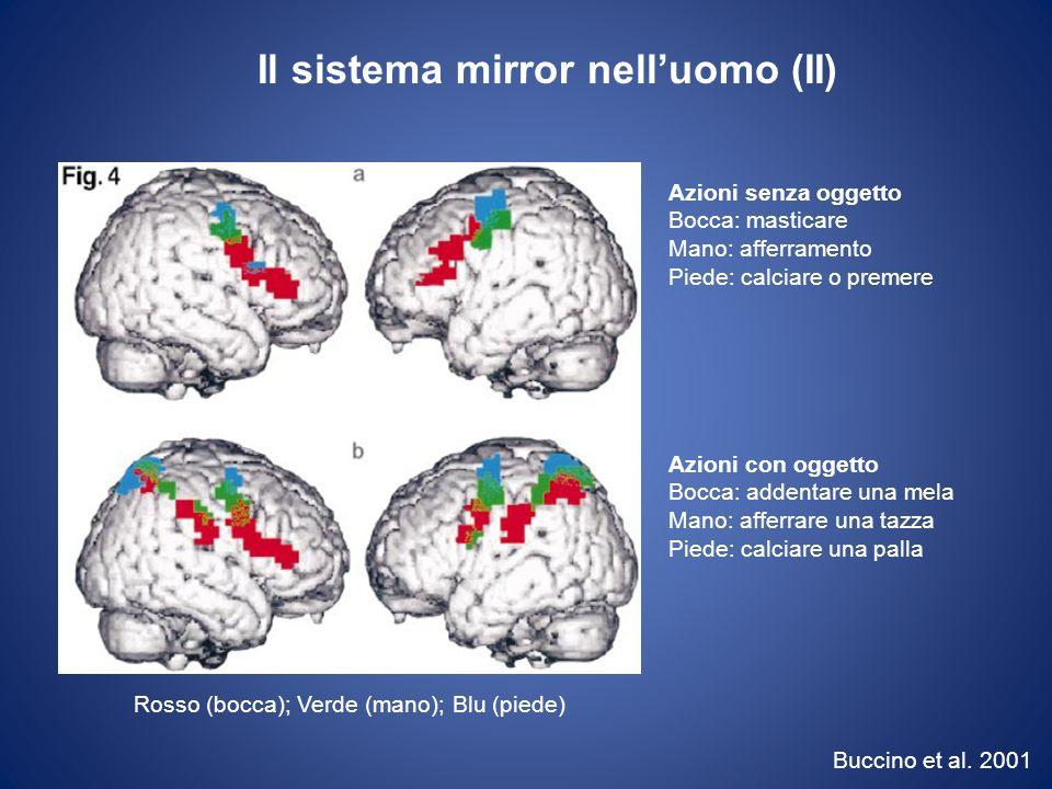 Il sistema mirror nell'uomo (II)