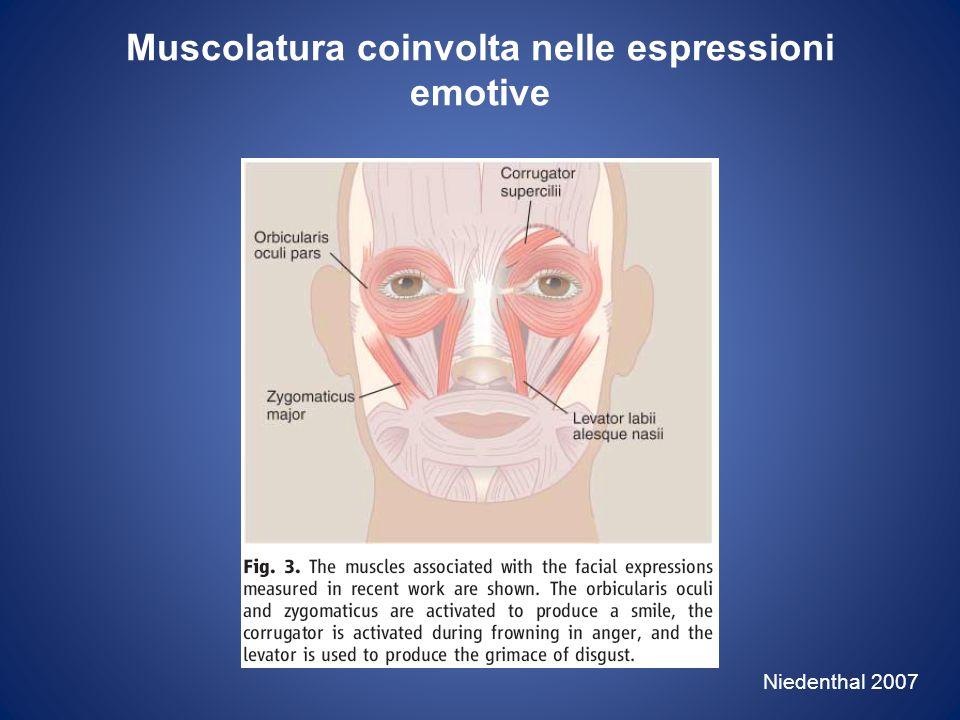 Muscolatura coinvolta nelle espressioni emotive