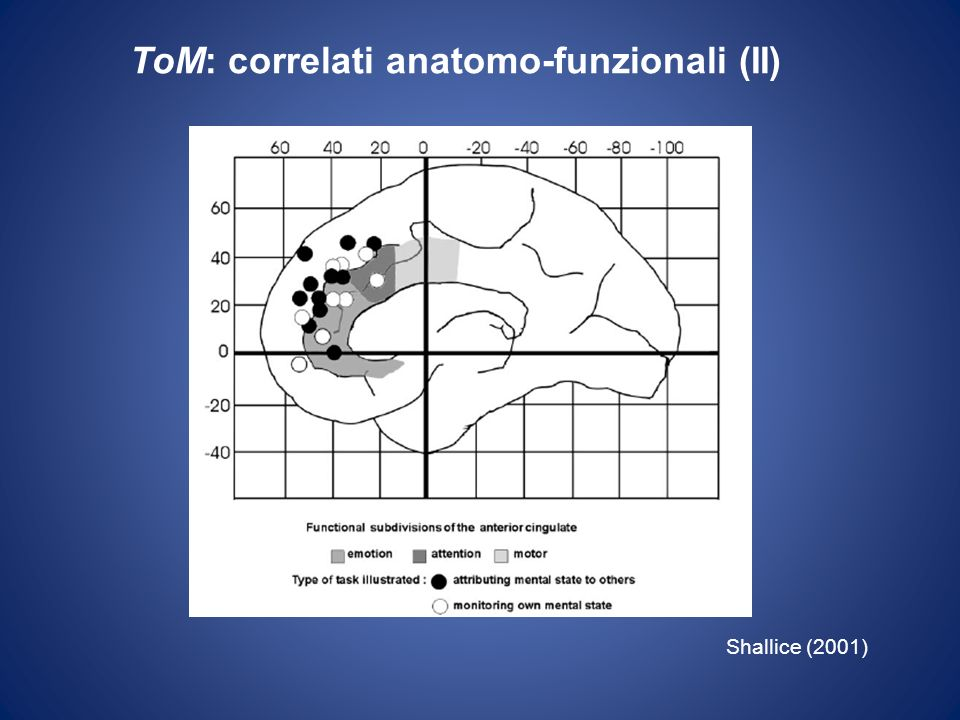 ToM: correlati anatomo-funzionali (II)