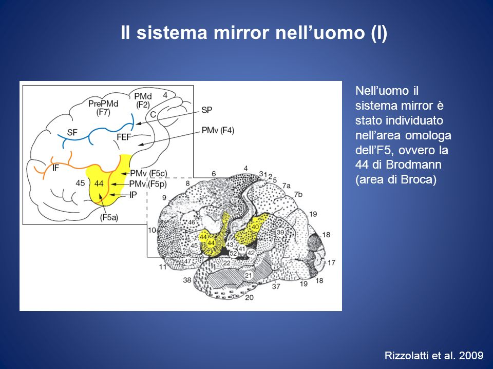 Il sistema mirror nell'uomo (I)