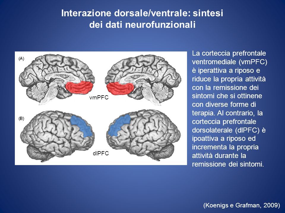 Interazione dorsale/ventrale: sintesi dei dati neurofunzionali