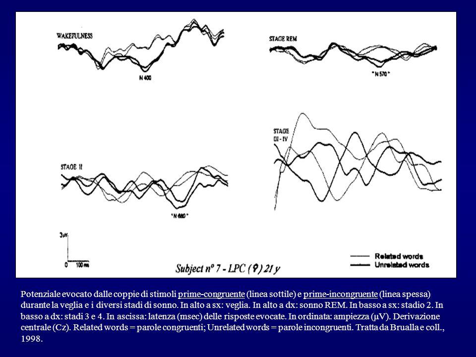 Potenziale evocato dalle coppie di stimoli prime-congruente (linea sottile) e prime-incongruente (linea spessa) durante la veglia e i diversi stadi di sonno.