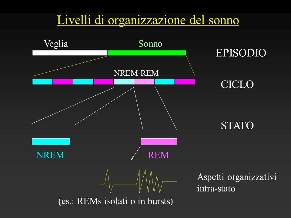 Livelli di organizzazione del sonno