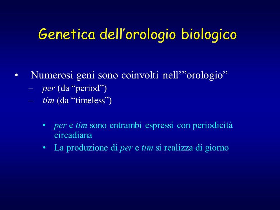 Genetica dell'orologio biologico