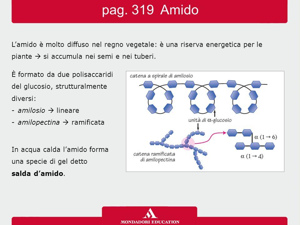 pag. 319 Amido L'amido è molto diffuso nel regno vegetale: è una riserva energetica per le. piante  si accumula nei semi e nei tuberi.