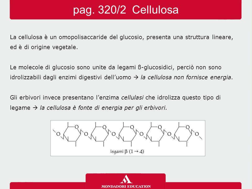 pag. 320/2 Cellulosa La cellulosa è un omopolisaccaride del glucosio, presenta una struttura lineare,