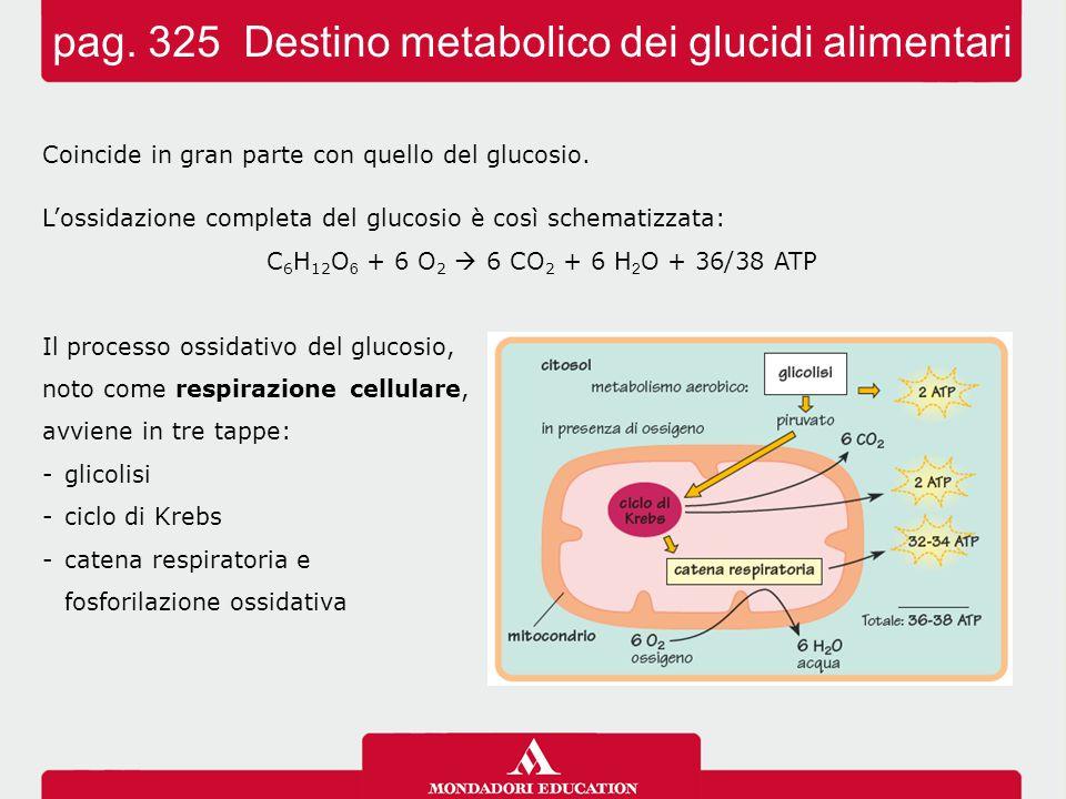pag. 325 Destino metabolico dei glucidi alimentari