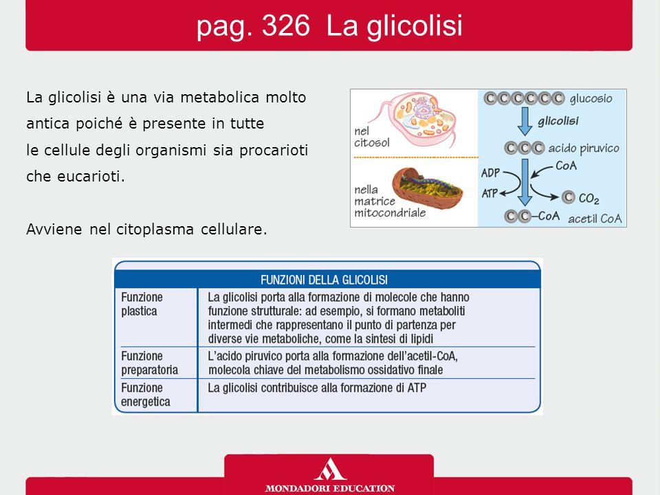 pag. 326 La glicolisi La glicolisi è una via metabolica molto
