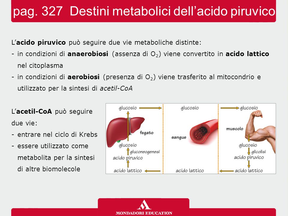 pag. 327 Destini metabolici dell'acido piruvico