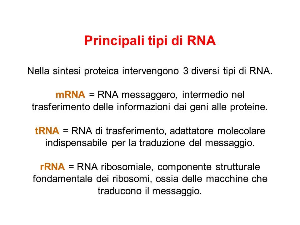 Principali tipi di RNA Nella sintesi proteica intervengono 3 diversi tipi di RNA.