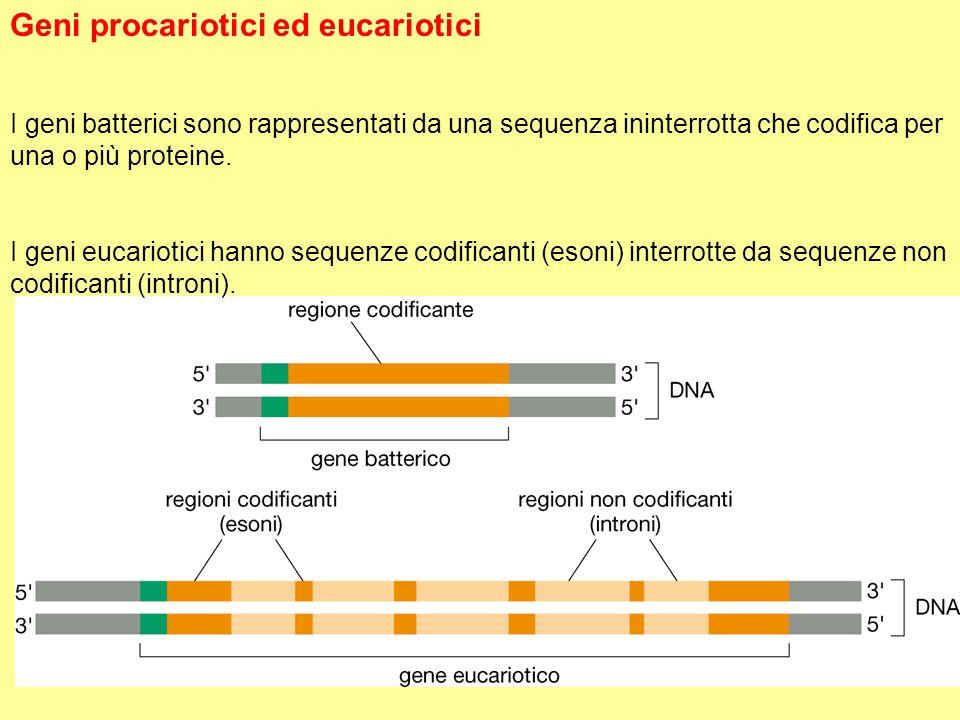 Geni procariotici ed eucariotici