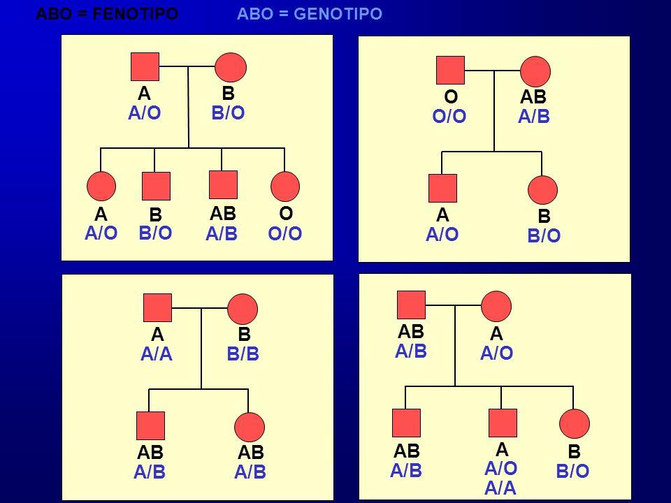 A B O AB A/O B/O O/O A/B A B AB O A B A/O B/O A/B O/O A/O B/O A B AB A