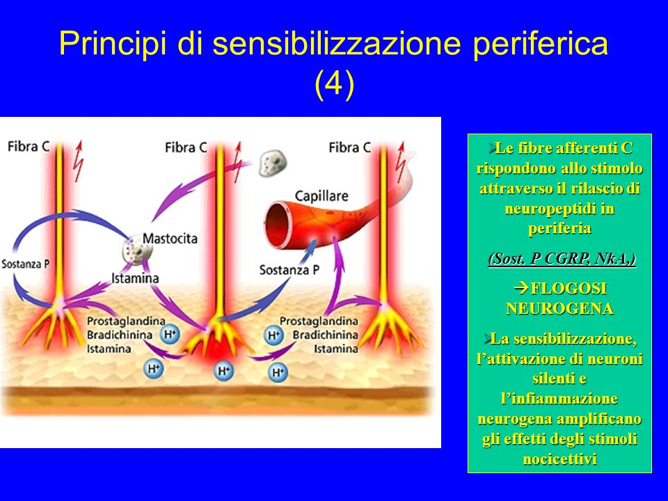 Principi di sensibilizzazione periferica (4)