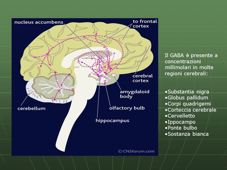 Il GABA è presente a concentrazioni millimolari in molte regioni cerebrali: