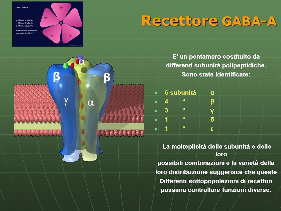 Recettore GABA-A  β β   E' un pentamero costituito da