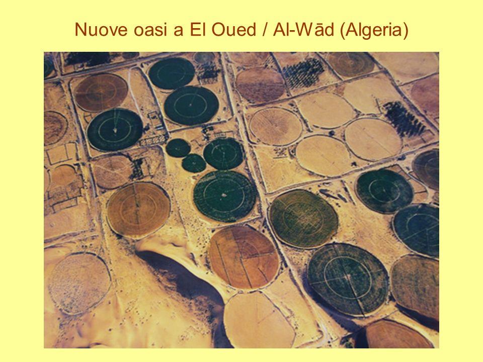 Nuove oasi a El Oued / Al-Wād (Algeria)