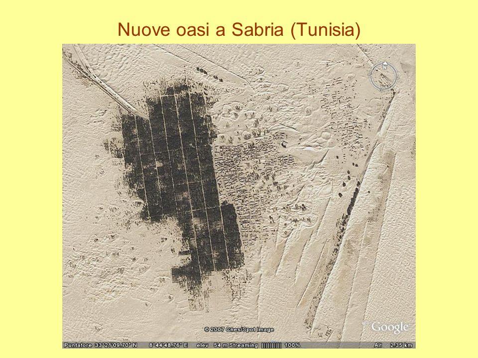 Nuove oasi a Sabria (Tunisia)