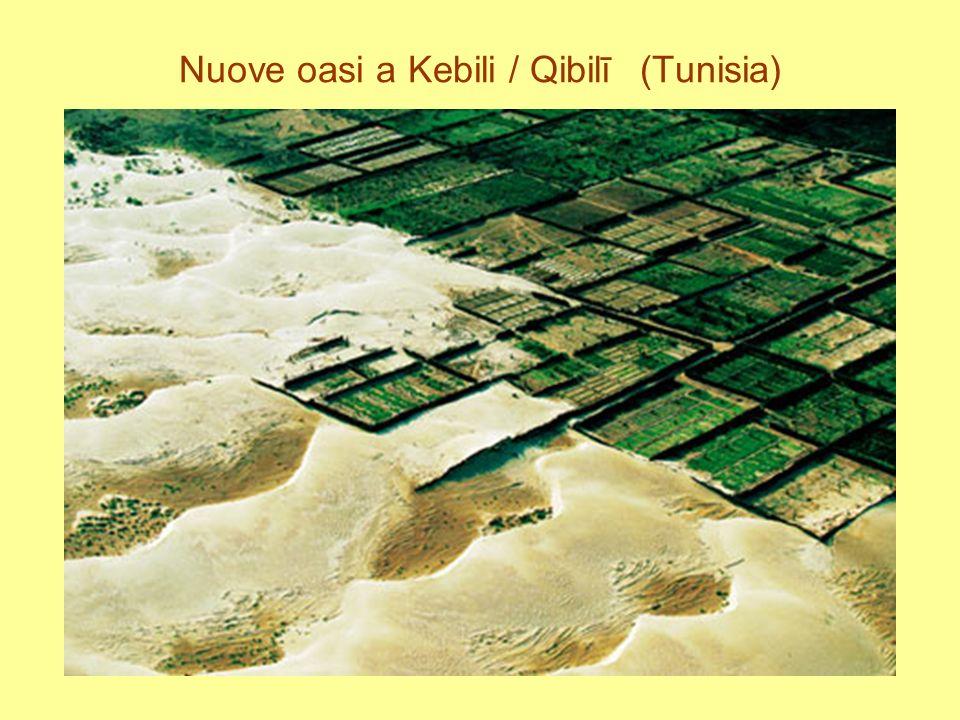 Nuove oasi a Kebili / Qibilī (Tunisia)