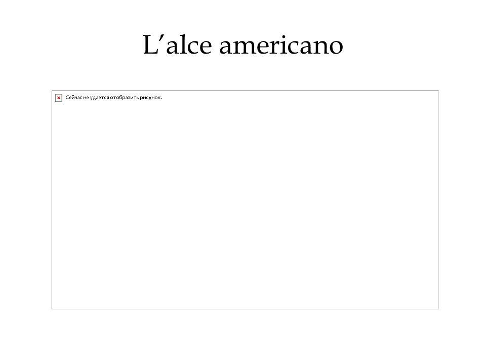L'alce americano