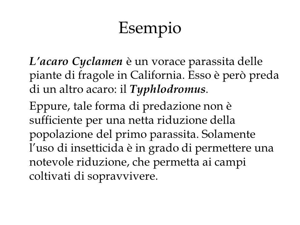 Esempio L'acaro Cyclamen è un vorace parassita delle piante di fragole in California. Esso è però preda di un altro acaro: il Typhlodromus.