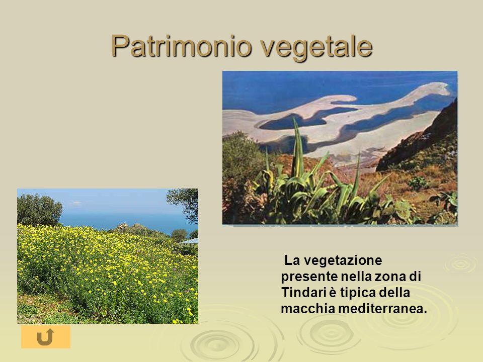 Patrimonio vegetale La vegetazione presente nella zona di Tindari è tipica della macchia mediterranea.