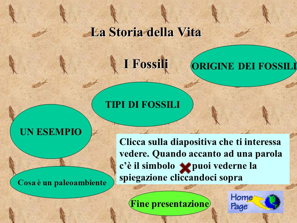La Storia della Vita I Fossili