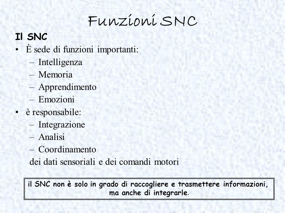 il SNC non è solo in grado di raccogliere e trasmettere informazioni,