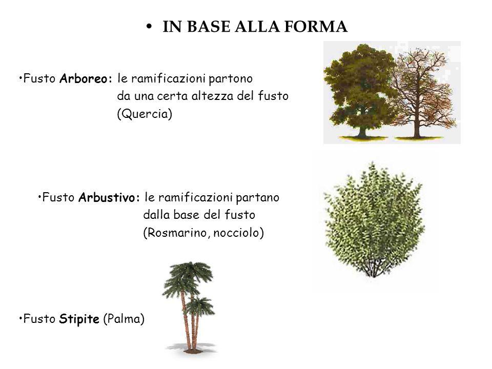 IN BASE ALLA FORMA Fusto Arboreo: le ramificazioni partono