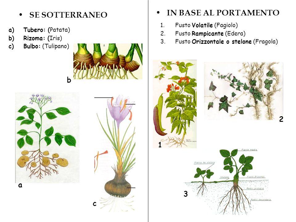 IN BASE AL PORTAMENTO SE SOTTERRANEO b 2 1 a 3 c