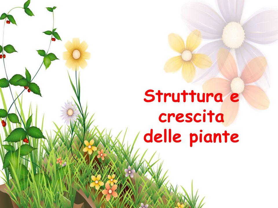 Struttura e crescita delle piante