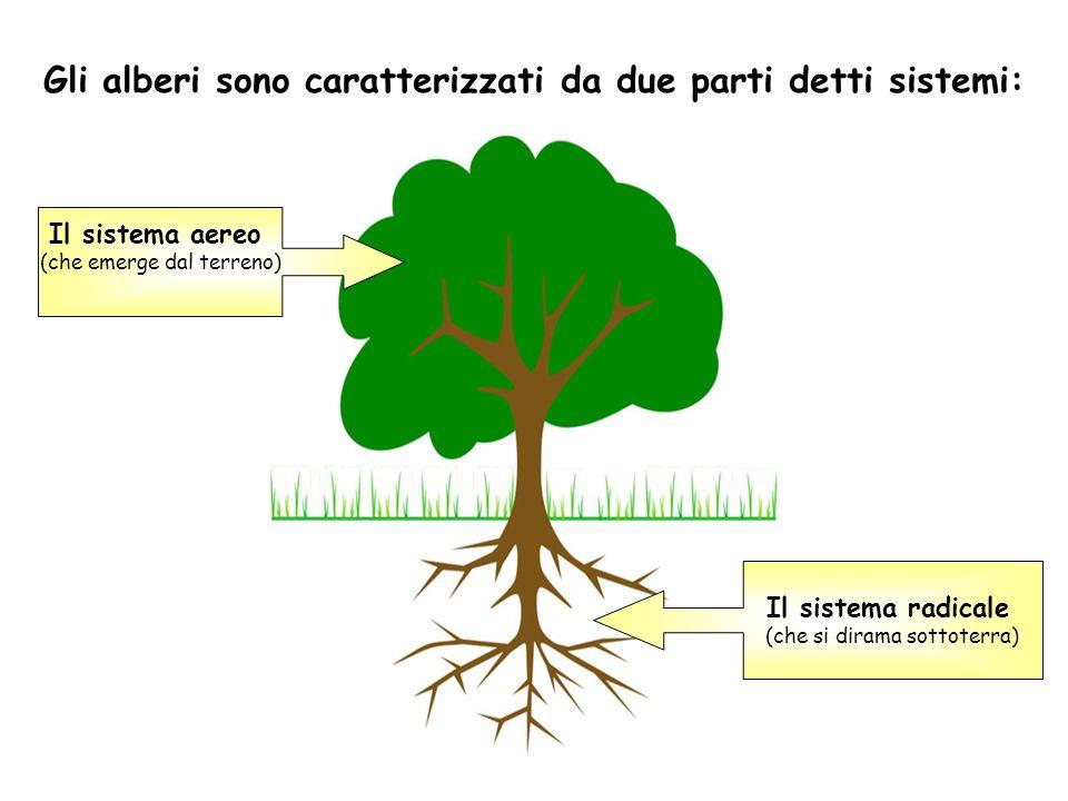 Gli alberi sono caratterizzati da due parti detti sistemi: