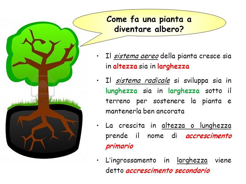 Come fa una pianta a diventare albero