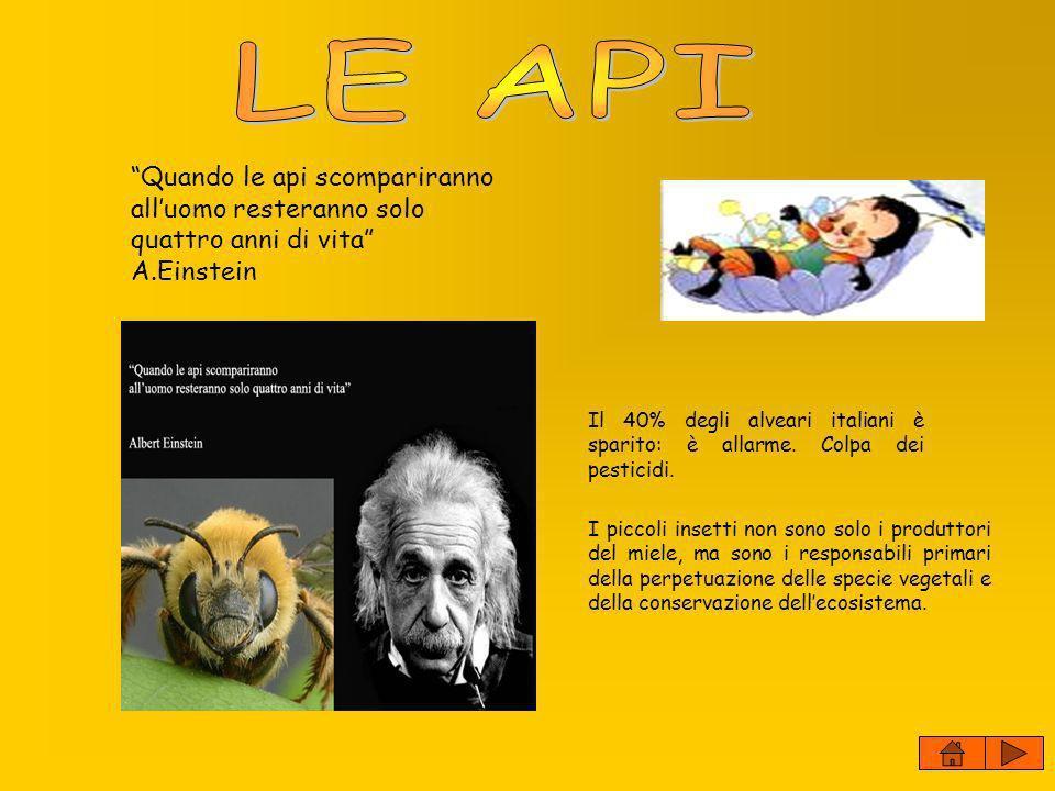 LE API Quando le api scompariranno all'uomo resteranno solo quattro anni di vita A.Einstein.