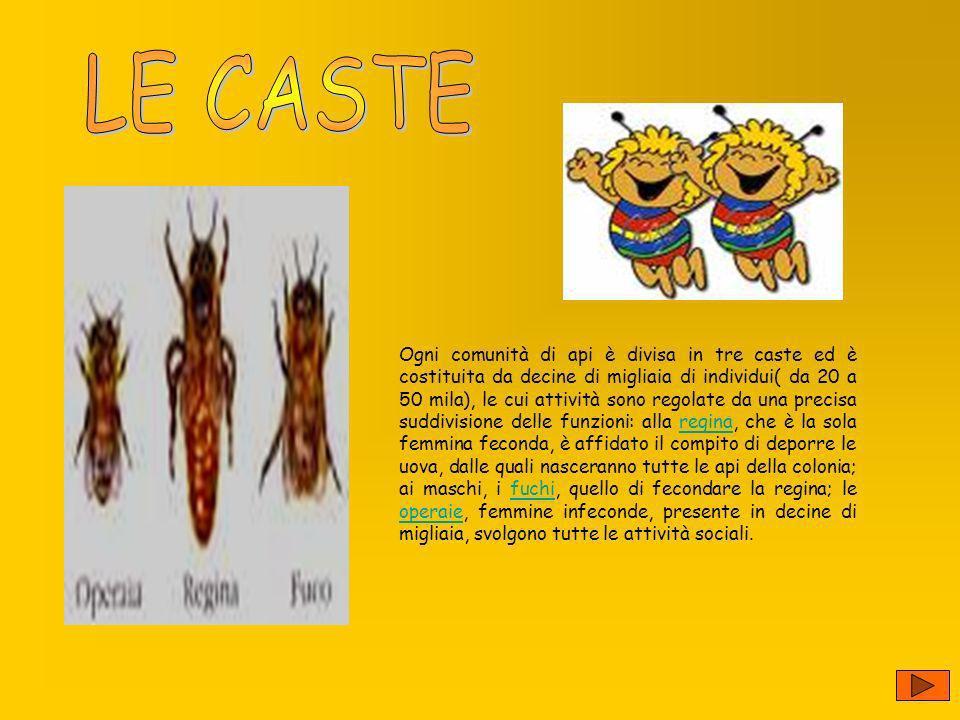 LE CASTE