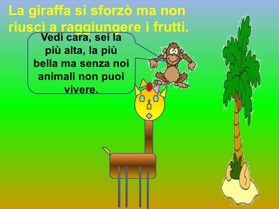 La giraffa si sforzò ma non riuscì a raggiungere i frutti.