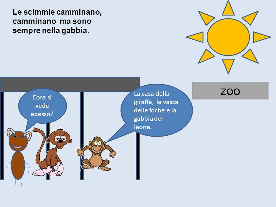 zoo Le scimmie camminano, camminano ma sono sempre nella gabbia.