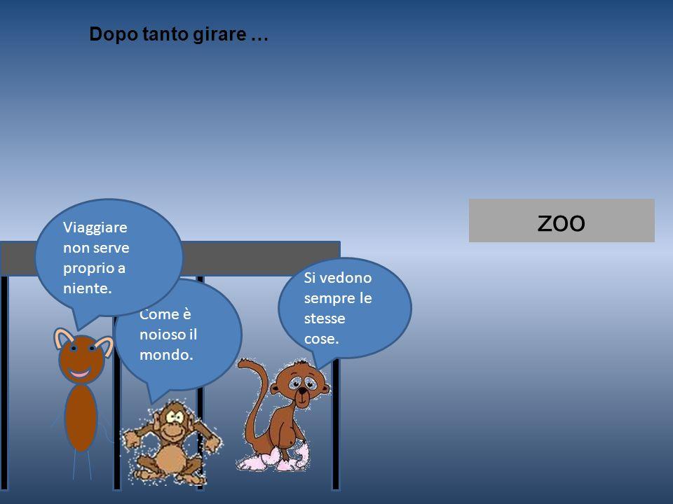 zoo Dopo tanto girare … Viaggiare non serve proprio a niente.