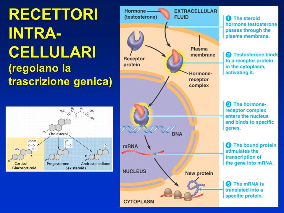 RECETTORI INTRA- CELLULARI (regolano la trascrizione genica)