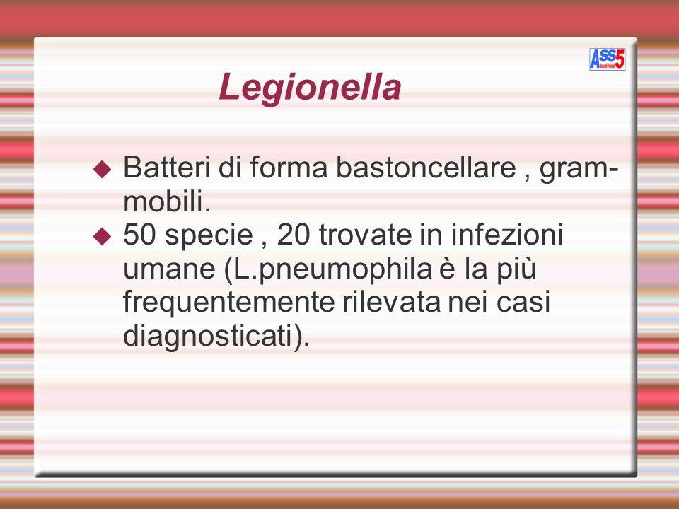 Legionella Batteri di forma bastoncellare , gram-mobili.