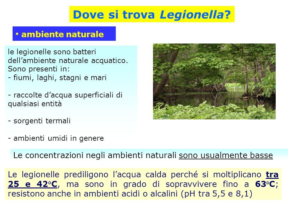 Dove si trova Legionella
