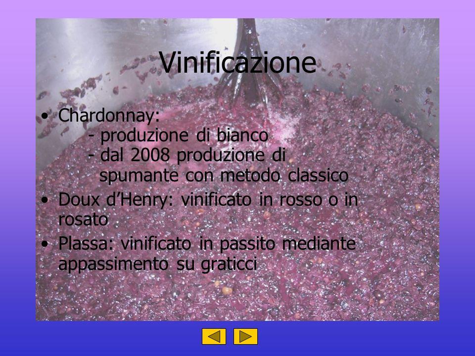 Vinificazione Chardonnay: - produzione di bianco - dal 2008 produzione di spumante con metodo classico.